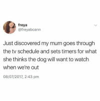 Ffs 😂😂: freya  @freyabcann  Just discovered my mum goes through  the tv schedule and sets timers for what  she thinks the dog will want to watch  when we're out  08/07/2017, 2:43 pm Ffs 😂😂