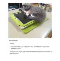 Girls, Ipad, and Memes: fricklefrackphan:  sniffing:  LOOK AT THIS LILLL BABY THAT FELL ASLEEP ON A GIRLS IPAD  DURING CLASS  where the fuck do you go to school where felines are allowed to roam free in  the classrooms that's it. that's its bed now. you cannot move it - Max textpost textposts