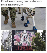 Funny, News, and Good: Frida the rescue dog now has her own  mural in Mexico City Finally some good news