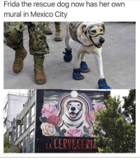 Memes, Mexico, and 🤖: Frida the rescue dog now has her own  mural in Mexico City  CERVECER https://t.co/oWwESeM5Sz