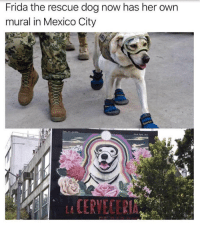 "Congratulations, Http, and Mexico: Frida the rescue dog now has her own  mural in Mexico City  CERVECER <p>Congratulations Frida! via /r/wholesomememes <a href=""http://ift.tt/2ytzyaz"">http://ift.tt/2ytzyaz</a></p>"