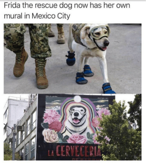 Congratulations, Mexico, and Her: Frida the rescue dog now has her own  mural in Mexico City  CERVECER Congratulations Frida!