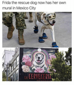 Mexico, Her, and Dog: Frida the rescue dog now has her own  mural in Mexico City M U R A L G I R L