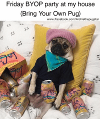 Facebook, Friday, and Friends: Friday BYOP party at my house  (Bring Your Own Pug)  www.Facebook.com/Archiethepugstar Who's coming? Pug hugs friends....😀😀😀🍾🍾🍾🍺🍺🍺  photo credit @itsdougthepug