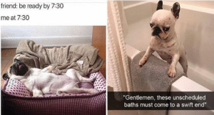 "Who's ready for some heckin' good boi/girl memes?! We definitely are! Nothing like a good healthy dump to make your day lighter and healthier!#dogs #dogmemes #funnymemes #funnydogmemes #animalmemes: friend: be ready by 7:30  me at 7:30  ""Gentlemen, these unscheduled  baths must come to a swift end"" Who's ready for some heckin' good boi/girl memes?! We definitely are! Nothing like a good healthy dump to make your day lighter and healthier!#dogs #dogmemes #funnymemes #funnydogmemes #animalmemes"