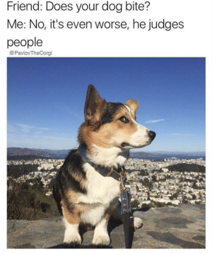 He judges but still luvs u: Friend: Does your dog bite?  Me: No, it's even worse, he judges  people  @PavlovTheCorgi He judges but still luvs u