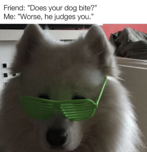 """Me irl: Friend: """"Does your dog bite?""""  Me: """"Worse, he judges you."""" Me irl"""
