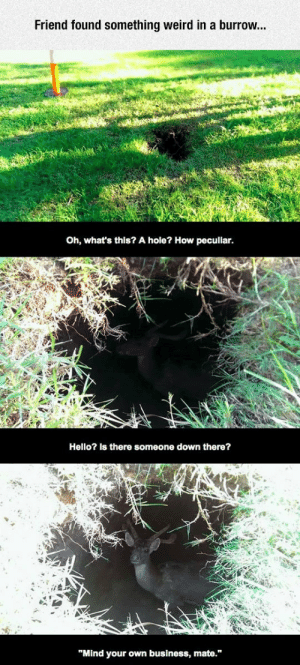 "laughoutloud-club:  But, How Did That Get…Wait, What?: Friend found something weird in a burrow...  Oh, what's this? A hole? How peculiar.  Hello? Is there someone down there?  ""Mind your own business, mate."" laughoutloud-club:  But, How Did That Get…Wait, What?"