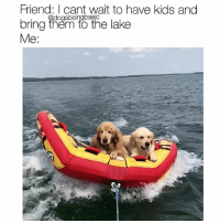 Nothing to see here, just to sea dogs tubing along. Pups @mypalo: Friend: I cant wait to have kids and  bring ihen to the lake  Me:  dogsbeingbasic Nothing to see here, just to sea dogs tubing along. Pups @mypalo