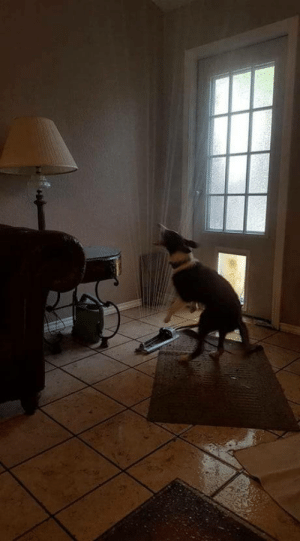 Friend of a friends pooch dragged the sprinkler in through the doggy door: Friend of a friends pooch dragged the sprinkler in through the doggy door