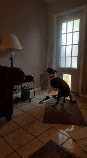 Friend of a friends pooch dragged the sprinkler in through the doggy door via /r/funny https://ift.tt/2uOtoyx: Friend of a friends pooch dragged the sprinkler in through the doggy door via /r/funny https://ift.tt/2uOtoyx