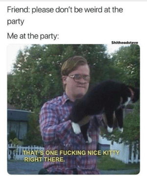 Fucking, Memes, and Party: Friend: please don't be weird at the  party  Me at the party:  Shitheadsteve  S ONE FUCKING NICE KITTY  RIGHT THERE