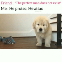 Dogs, Funny, and Love: Friend: The perfect man does not exist'  Me: He protec, He attac  unpawcare Perfection! Tag a perfect Pupper 😍 @funpawcare . . dogtraining puppylove dogwalking dogpark doglover puppies puppy pupper puppers puppiesofinstagram dogstagram perro golden goldenretriever goldenretrievers goldenretrieversofinstagram dogs dog santamonica @winston_moose pet pets beverlyhills la venice funny malibu pacificpalisades love dogsofinstagram newpuppy