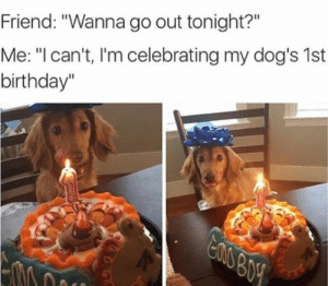 """Friend: On that pic it looks like his fifth birthday.: Friend: """"Wanna go out tonight?""""  Me: """"I can't, I'm celebrating my dog's 1st  birthday""""  eauBoy Friend: On that pic it looks like his fifth birthday."""