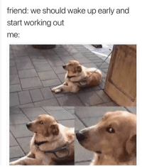 Memes, Working Out, and Happy: friend: we should wake up early and  start working out  me: Happy weekend y'all! Here's a roundup of excellent random memes for you! #DogMeme #RandomMemes #FunnyMemes