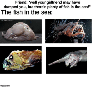 "Fuck it , number 1 please: Friend: ""well your girlfriend may have  dumped you, but there's plenty of fish in the sea!""  The fish in the sea:  imgip.com Fuck it , number 1 please"