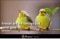 Memes, 🤖, and Html: Friends are the siblings God  never gave us  Mencius  Brainy  Quote Friends are the siblings God never gave us. - Mencius https://www.brainyquote.com/quotes/quotes/m/mencius379023.html #brainyquote #QOTD #friends #family #birds