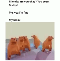 My brain everyday 😂: Friends: are you okay? You seem  Distant  Me: yea l'm fine  My brain: My brain everyday 😂