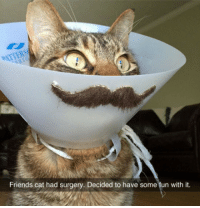 Friends, Beats, and Cat: Friends cat had surgery. Decided to have some fun with it. <p>These Are Not The Beats You're Looking For.</p>