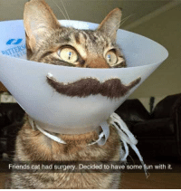 Friends, Epic, and Cat: Friends cat had surgery. Decided to have some fun with it. <p>Epic Meowstach.</p>