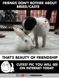 Friends, Internet, and Today: FRIENDS DONT BOTHER ABOUT  BREED/CASTE  THAT'S BEAUTY OF FRIENDSHIP  CUTEST PIC YOU WILL SEE  ON INTERNET TODAY  flaughingcolours