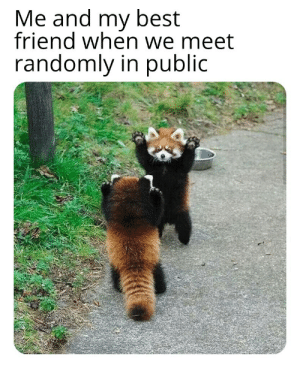 Friends meme everything to me: Friends meme everything to me