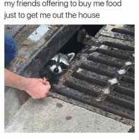 Food, Friends, and Memes: friends  offering  food  my to buy me  just to get me out the house me