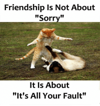 "Memes, Sorry, and Friendship: Friendship Is Not About  """"  Sorry  It Is About  ""It's All Your Fault"""