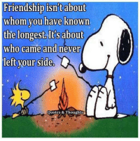for more great snoopy pictures check out  www.facebook.com/lovethatbeagle: Friendship isntabout  whom you have known  the longest lts about  who came and never  left your side  O  Quotes & Thoughts for more great snoopy pictures check out  www.facebook.com/lovethatbeagle