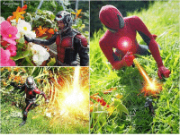From @avengergram - Playing in the garden. Antman Spiderman holiday garden countryside civilwar marvel avengers avengergram onesixthrepublic hottoys toyslagram toystagram toyspotcollector toysyn toyphotography colecionatoy toptoyphotos hottoys: From @avengergram - Playing in the garden. Antman Spiderman holiday garden countryside civilwar marvel avengers avengergram onesixthrepublic hottoys toyslagram toystagram toyspotcollector toysyn toyphotography colecionatoy toptoyphotos hottoys