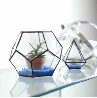 From cd case to beautiful terrarium!: From cd case to beautiful terrarium!