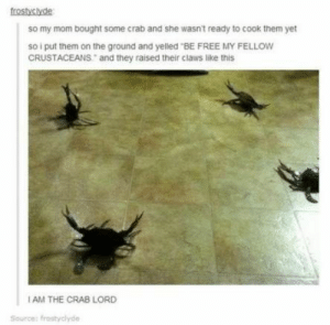 """Funny Tumblr Conversations Humor Pictures 16+ Ideas For 2019 #funny #humor: frostyclyde  so my mom bought some crab and she wasn't ready to cook them yet  so i put them on the ground and yelled """"BE FREE MY FELLOW  CRUSTACEANS and they raised their cliaws like this  AM THE CRAB LORD  Source: frostyclyde Funny Tumblr Conversations Humor Pictures 16+ Ideas For 2019 #funny #humor"""