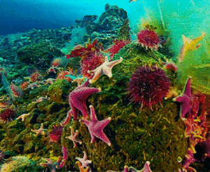 frozenplanet:  Red Sea Stars : frozenplanet:  Red Sea Stars