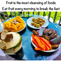 Apple, BlackBerry, and Food: Fruit is the most cleansing of foods  Eat fruit every morning to break the fast  @ehakabars Everyday fruit heaven, are you eating fruit for breakfast? Learn about what you are eating and why, Afrikans stop eating like cave people, you were never cave people... ❤️ What I eat for breakfast every morning should be healthy so I eat Fruits: Fruits DO NOT mix well with any other food group! Fruits should be eaten alone as a snack or meal on an empty stomach. Fruits (especially tropical ones) have digestive enzymes that help to clean out the residue left over from the food you've eaten the night before. Pineapple is a great fat burner and roto-rooter, scrubbing and cleansing its way through your intestinal tract. Papaya has a number of medicinal qualities and has been proven to be an effective meat tenderiser. Fruits travel through the digestive tract very quickly (within an hour) which is why it's so important not to eat them with any other food group. Fruits are made up of 4 groups: Acid fruits, Sub-Acid Fruits, Sweet Fruits & Melons. With Food Combining, you typically NEVER want to mix any of the fruits with any other food group, and each fruit group should be eaten separately from one another. HOWEVER, you can bend this rule to a degree. Acid fruits Acid Fruits have the most fiber and are rich in antioxidants. Approximate digestion time: 20 to 30 mins Blackberry Cherries (Sour) Cranberry Gooseberries Grapes (Sour) Grapefruit Kumquats Lemon Lime Loganberries Orange Pineapple Plum (Sour) Pomegranate Raspberry Sour Apple Strawberry Tangelo Tangerine Tomatoes Sub-acid fruits Apple Approximate digestion time: 30 to 40 minutes Apricot Blueberry Cherry Grapes (Not Sweet Or Sour) Kiwi Lychee Mango Nectarine Papaya Peach Pear Plum (Sweet) Sweet fruits Are more concentrated and take longer to digest. They're not the greatest of cleansers, but do provide minerals and concentrated sugars. Approximate digestion time: 40 to 60 minutes Currents Dates Figs Grapes (All Sweet Grapes Like Thompson) Papaya Persimmon Prunes Raisins Banana Acid & sub acid is ok Sub acid & sweet is ok Do not combine acid & sweet fruits. Melon should be eaten on its own... famfoods chakabars