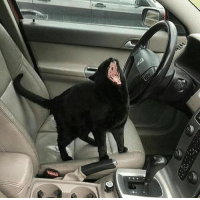 Tumblr, Blog, and Http: ftcreature:road rage