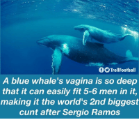 Memes, Blue, and Cunt: fTrollFootbal  A blue whale's vagina is so deep  that it can easily fit 5-6 men in it  making it the world's 2nd biggest  cunt after Sergio Ramos