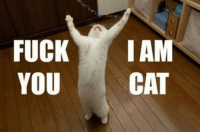 Cats, Fucking, and Fuck: FUCK  I AM  YOU  CAT FUCK I AM YOU CAT