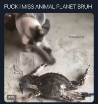 Animal Planet, Bruh, and Funny: FUCK IMISS ANIMAL PLANET BRUH  @staggering  0:06 GET DAT NIGGA @larnite • ➫➫➫ Follow @Staggering for more funny posts daily!