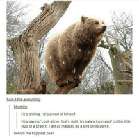 "Memes, Fuck It, and 🤖: fuck-it-fire-everything  bhamms  He's smiling. He's proud of himself.  He's saying ""Look at me, that's right, l'm balancing myself on this little  stub of a branch. am as majestic as a bird on its perch  behold the happiest bear burrr"