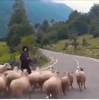 Bad, Fuck, and Fuck That: Fuck that last hit.. Sheeps can be real assholes if you get on their bad side..