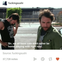 Cats, Home, and Humans of Tumblr: fuckin  gsushi  Sir, we alt have cats weld rather be  home playing with rigt now.  Source: fuckingsushi  37,728 notes