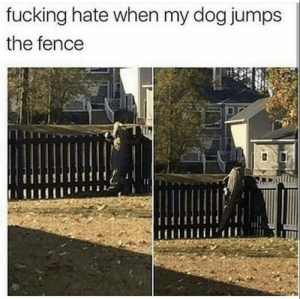 Dog Jumps