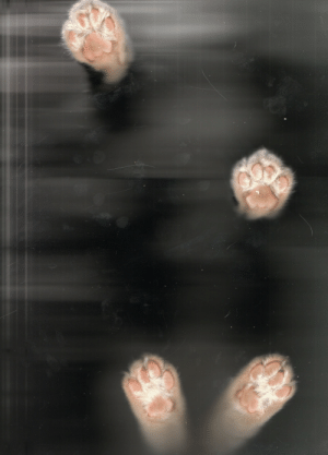 Tumblr, Blog, and Http: fuckyeahcats: Cat-scan 'Muis/Mouse' Scan by Thoughtslikeskyscrapers