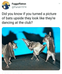 Club, Dancing, and Internet: Fuggoffatron  @Pariah1974  Did you know if you turned a picture  of bats upside they look like they're  dancing at the club? This is what we need Internet for.