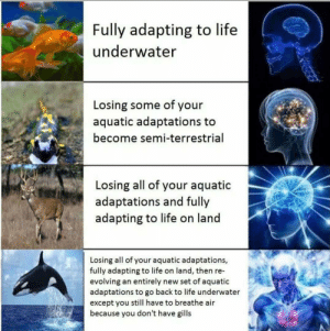 2nd smartest species on Earth? by Pirate_Redbeard FOLLOW HERE 4 MORE MEMES.: Fully adapting to life  underwater  Losing some of your  aquatic adaptations to  become semi-terrestrial  Losing all of your aquatic  adaptations and fully  adapting to life on land  Losing all of your aquatic adaptations,  fully adapting to life on land, then re-  evolving an entirely new set of aquatic  adaptations to go back to life underwater  except you still have to breathe air  because you don't have gills 2nd smartest species on Earth? by Pirate_Redbeard FOLLOW HERE 4 MORE MEMES.