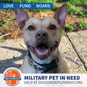 Best Friend, Cats, and Dogs: FUND BOARD  LOVE  y boarding their pets  MILITARY PET IN NEED  Dogs on Deployment  HELP AT DOGSONDEPLOYMENT.ORG  dossondeployment.ors  Support yourt Molly is from #Fitchburg #MA and wins 'best smile award'! She gets nervous around new people, but once she warms up she will be your best friend! Molly would need to be in a place without dogs or cats - can you help?  Location: Fitchburg, MA Date: July 1, 2019 - February 1, 2020  Pet's Name: Molly Breed: Pitbull Gender: Spayed Female Size: Large (46-65 lbs) Age: Adult (4-9 years)  Visit https://www.dogsondeployment.org/profile/56937 to learn more about us, register and contact our owner! (Must be registered and logged on to view all information!)