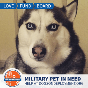 Cats, Dogs, and Love: FUND  LOVE  BOARD  boarding their pet  by  rt your tro0ps  MILITARY PET IN NEED  Dogs on Deployment  HELP AT DOGSONDEPLOYMENT.ORG  doisondeployment.ors LONG TERM: Nova is a #Husky who hails from #VirginiaBeach who loves going on walks, but other than that prefers to be indoors. She is good with kids, but is not a fan of other dogs or cats. Can you help?  Location: Virginia Beach, VA Date: July 1, 2019 - March 1, 2020  Pet's Name: Nova Breed: Siberian Husky Gender: Neutered Male Size: Extra Large (Greater than 66 lbs) Age: Adult (4-9 years)  Visit https://www.dogsondeployment.org/profile/57220 to learn more about us, register and contact our owner! (Must be registered and logged on to view all information!)