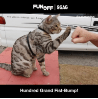 Didga and Boomer = the most talented cats ever! Thanks @catmantoo for this 🐈 9GAGFunOff shout out! Send your videos to link in bio and win $100,000‼️: FUNeFF 9GAG  viral videos tutorials cats & dogs  Hundred Grand Fist-Bump! Didga and Boomer = the most talented cats ever! Thanks @catmantoo for this 🐈 9GAGFunOff shout out! Send your videos to link in bio and win $100,000‼️