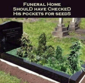 420humor: FUNERAL HOME  SHOULD HAVE CHECKED  HIS POCKETS FOR SEEDS 420humor