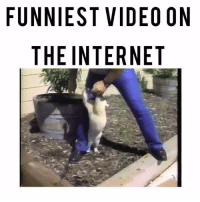"😂🔥😬  (Wait til the end!!!)...Haha this video is what made me fall in love with the internet years ago.  I still die 💪🏽😹 every time I see it.  Remember he was going to offer this ""loving"" cat to someone for pet adoption....smh....hahaha😂😂 #pinkythelovingcat: FUNNIEST VIDEO ON  THE INTERNET  OT  EE  DN  IR  VE  TT  SN  El  IE  NH쪽  NT 😂🔥😬  (Wait til the end!!!)...Haha this video is what made me fall in love with the internet years ago.  I still die 💪🏽😹 every time I see it.  Remember he was going to offer this ""loving"" cat to someone for pet adoption....smh....hahaha😂😂 #pinkythelovingcat"